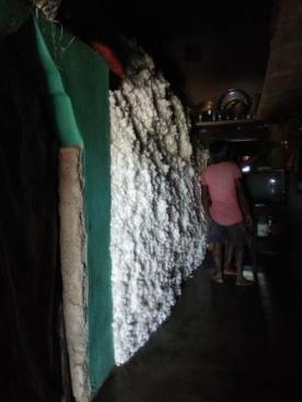 cotton gaji1